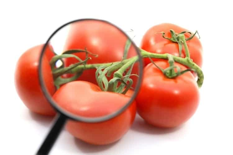 Tomato Automated Quality Inspection
